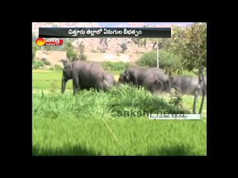 Elephants attack on Crops at Chittoor...