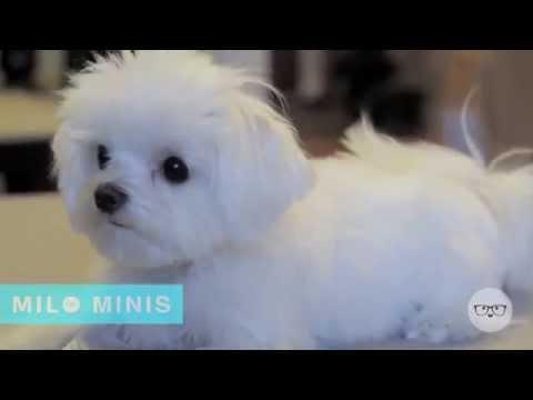 Milo's Puppy Tricks