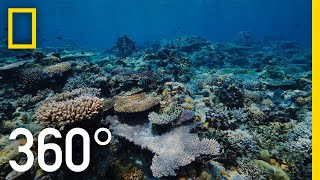 Grandpa's Reef - 360 | National Geographic