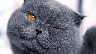 Новые приключения смешных кошек и котов