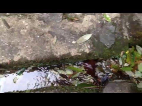 bag dwar shivapuri ! Holy Bagmati River's Origin Place