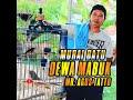 Murai Batu Dewa Mabuk Mr Agus Tatto  Mp3 - Mp4 Download