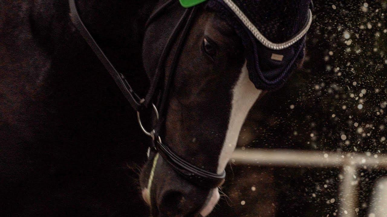 Sport Horse Films Australia | STALLION VIDEO | EPH California