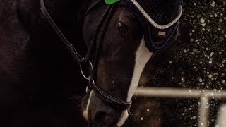 EPH California | STALLION VIDEO | Sport Horse Films