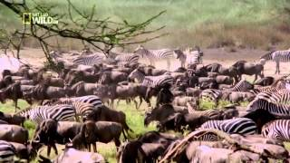 National Geographic   Wild Brutal Killers 720p