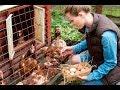 Tavukların Yumurta Verimini Nasıl Arttırırız? (TATMİN EDİCİ YUMURTA VERİMİNE ULAŞABİLMEK!)
