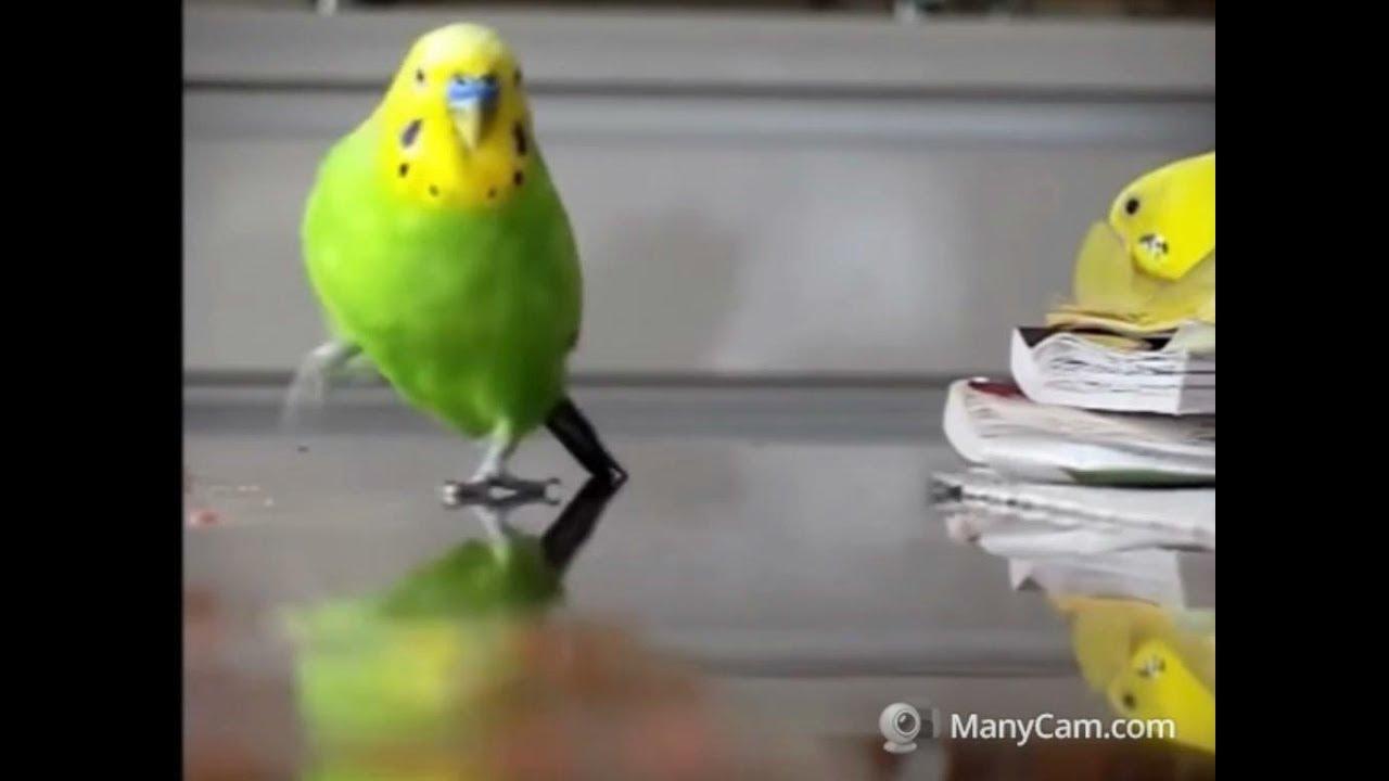 Birds Memes Funny Edition Youtube