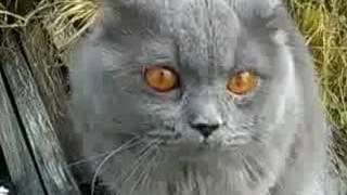 Кот разговаривает после валерьянки