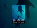 Galapagos: Realm of Giant Sharks Download Mp4