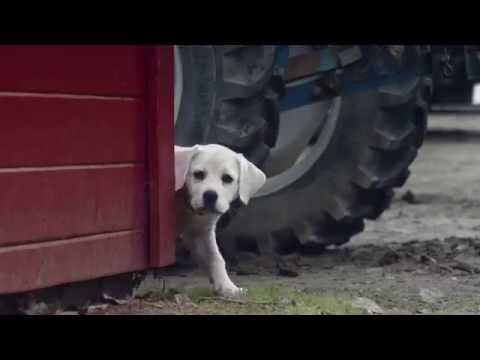 8 Marketing Lessons from the 2015 Super Bowl Commercials