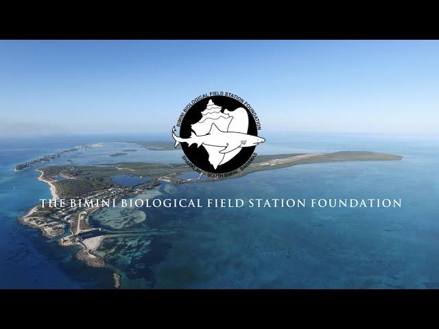 The Bimini Biological Field Station Foundation