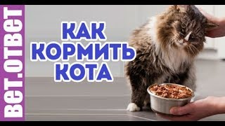 видео Чем кормить кастрированного кота?