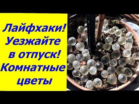 ЛАЙФХАКИ УЕЗЖАЙТЕ В ОТПУСК!!! КОМНАТНЫЕ РАСТЕНИЯ БЕЗ ВАС!