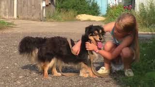 Собака Дворянской породы в добрые руки!!!