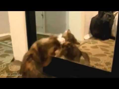Funny Animals & Mirrors