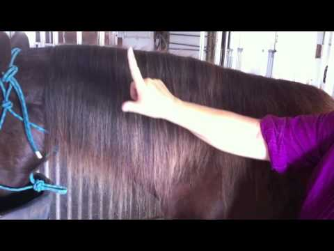 Growing a Horse Mane