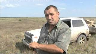 Южный регион выпуск фазанов в Туркменском районе Ставропольского края 2013г.