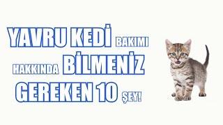 Yavru Kedi Bakımı Hakkında Bilmeniz Gereken 10 Şey!