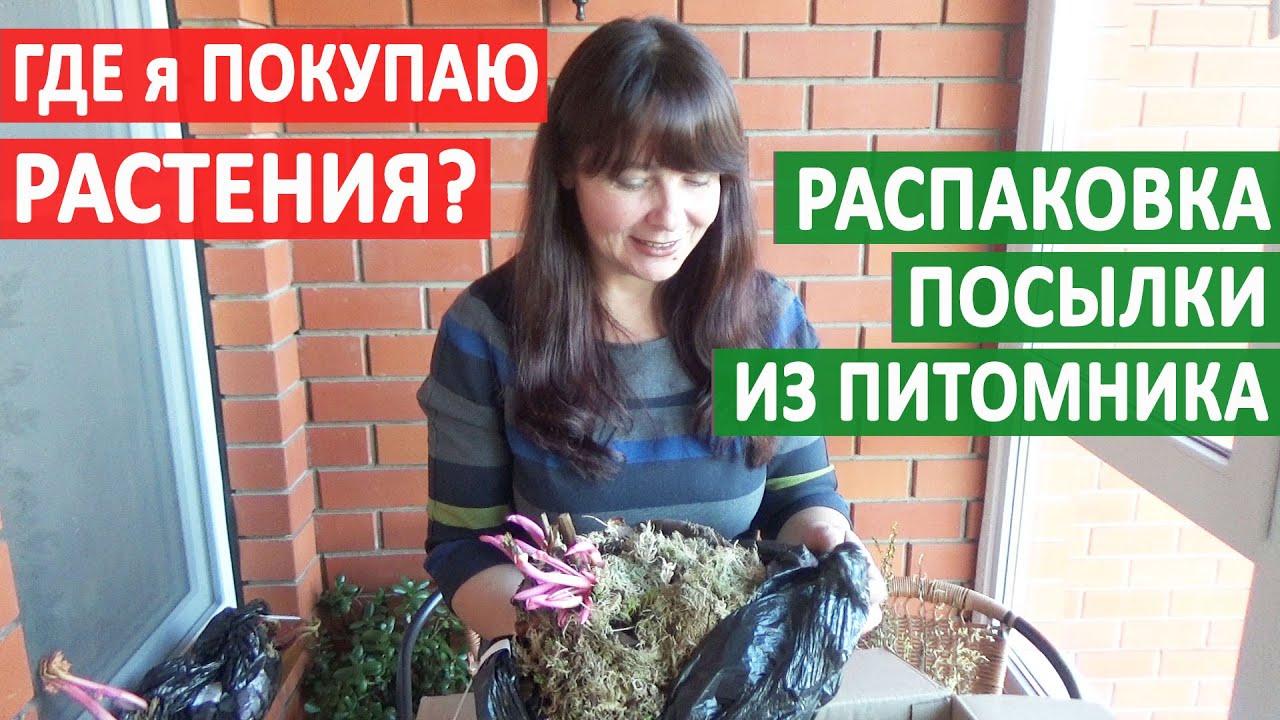 """Где я покупаю РАСТЕНИЯ для САДА? Посылка из Интернет - магазина ПИТОМНИКА """"Дельфиниум.ру"""". СМОТРИМ!"""