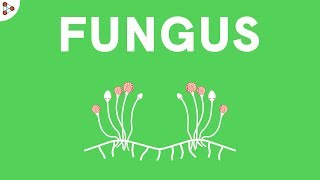 Biology - Microorganisms (Introduction to Fungus) - CBSE Class 8