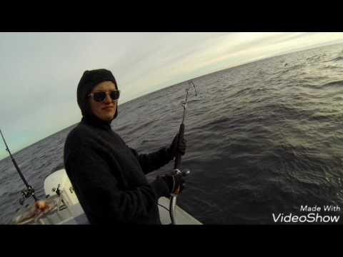 Groper Fishing Akaroa New Zealand