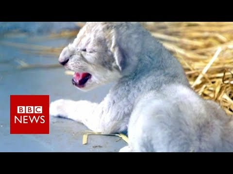 The Animals Rescued From War Zones - BBC News