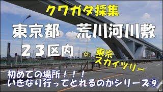 今年の最大目標であった東京都23区内でのクワガタ採集に行ってきました...
