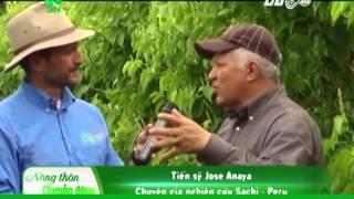 Nguồn gốc và tiềm năng phát triển cây sachi