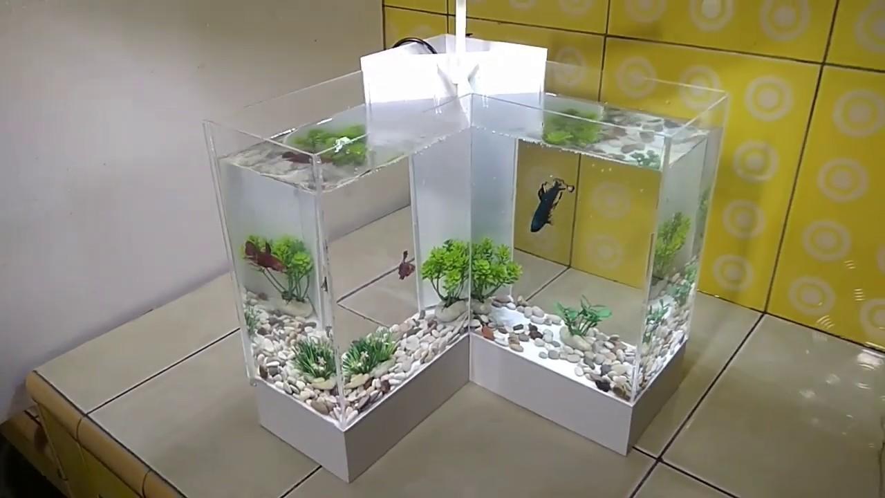Membuat Aquarium Ikan Cupang Model L Youtube