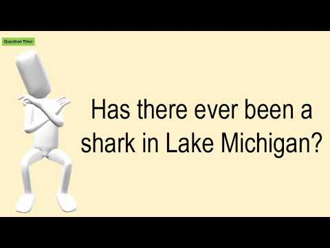 Has There Ever Been A Shark In Lake Michigan?