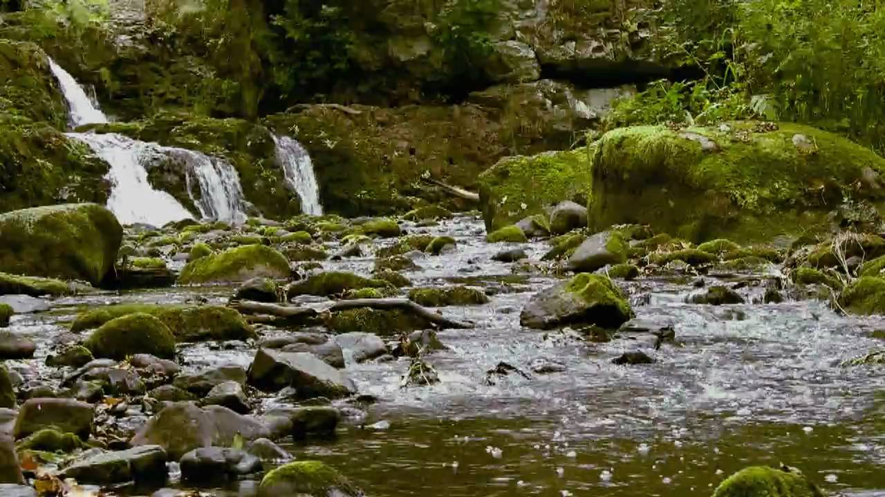Relaxing Nature Scenes - Nature's Relaxing Music - YouTube