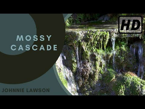 Nature Sounds-Relaxing Dripping Waterfall-Forest Sound of Birdsong-Relaxation-Meditation-Mindfulness