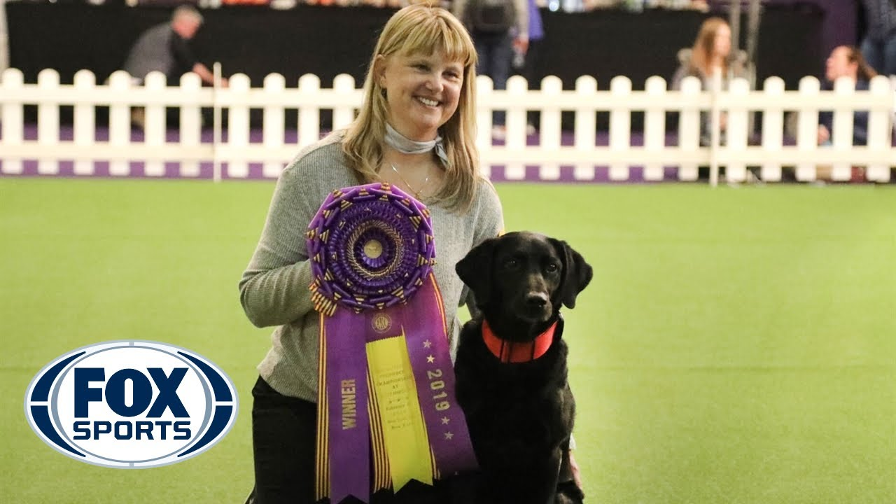 'Heart' the black lab wins the Masters Obedience Championship for the 4th straight year