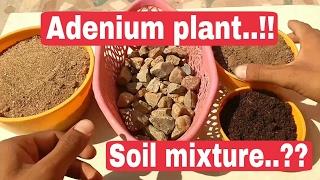 Adenium plant soil mixture, Adenium plant care