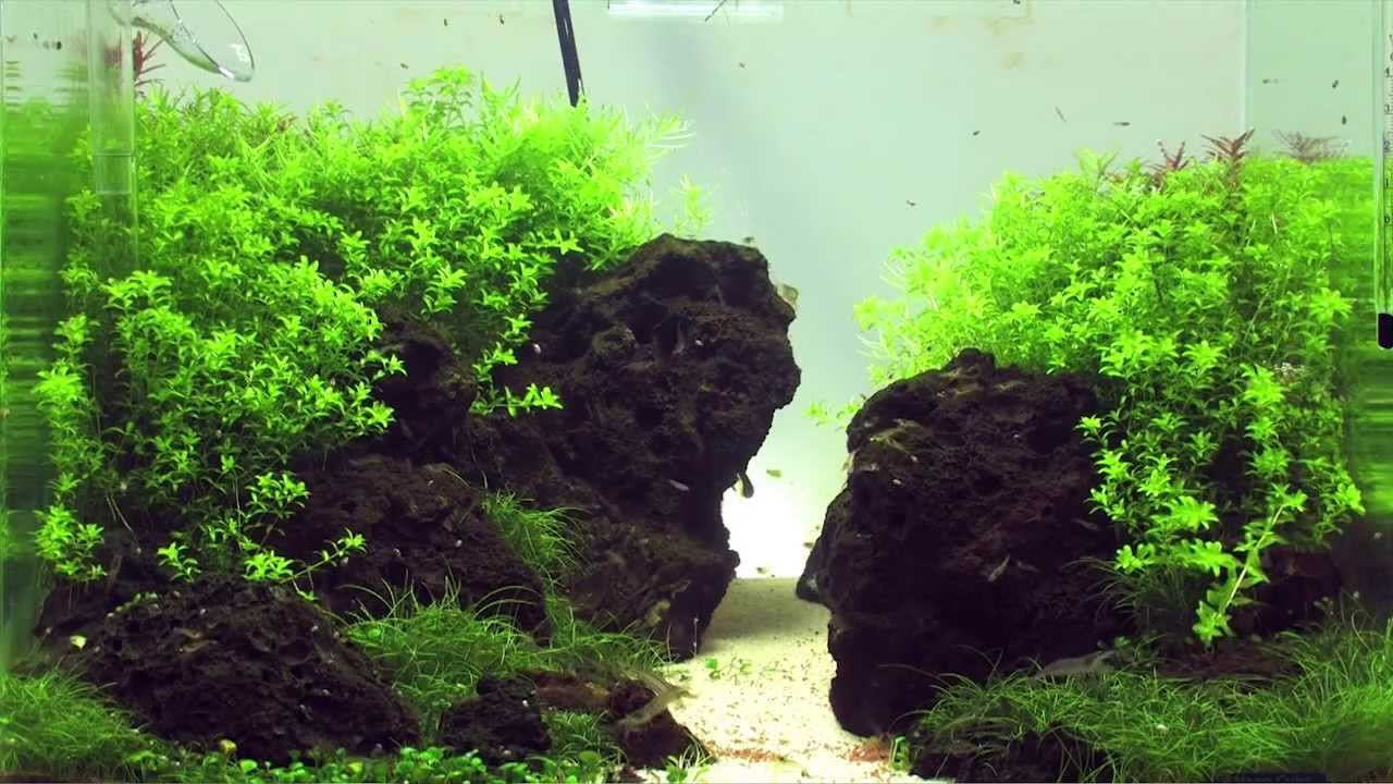 Einrichten eines Aquascaping Aquariums - YouTube