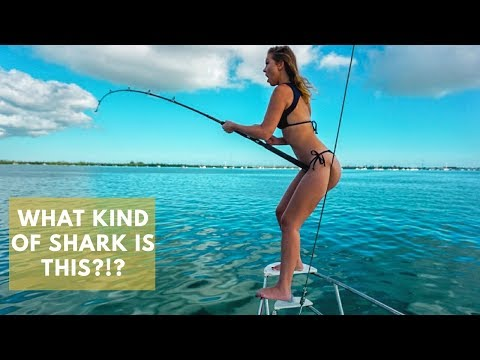 Shark Fishing BATTLE!