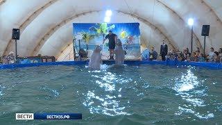 Детям бесплатно показали шоу дрессированных дельфинов