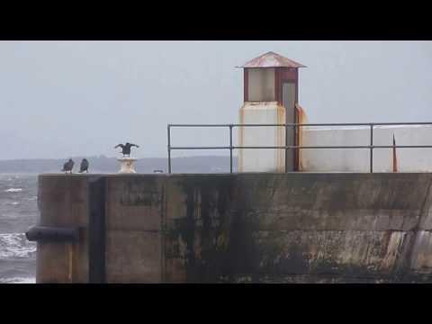 Cormorant's having fun in the wind at Burghead Harbour, Moray. Scotland