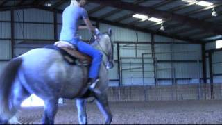 Own son of DASH FOR PERKS - 5 yo dapple gray gelding FOR SALE.
