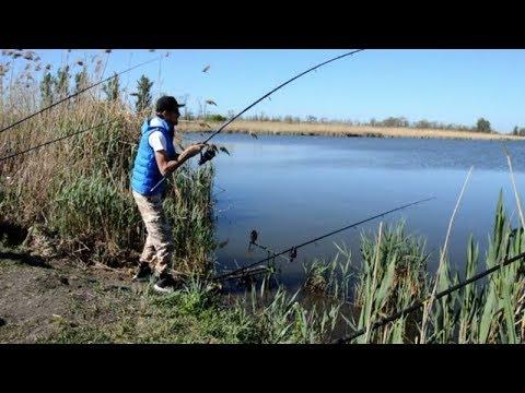 Жаркая Рыбалка на Сазана! Ловля сазана в Краснодарском Крае!