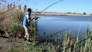 Download Жаркая Рыбалка на Сазана! Ловля сазана в Краснодарском Крае! Mp3 and Videos