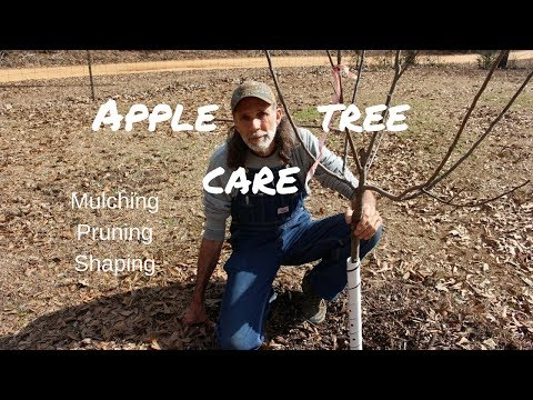 How to Care for Young Apple Trees