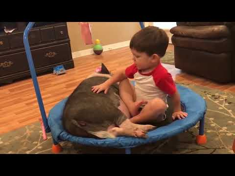 Look at the funny reaction of animals scaring people, make laughs - best funny animals