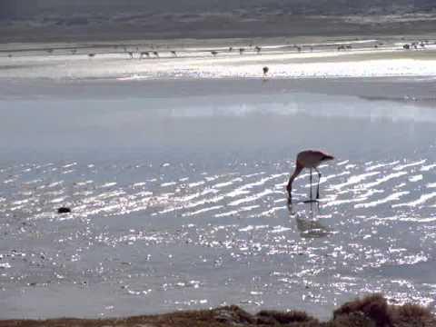 The Sound of a Content Flamingo