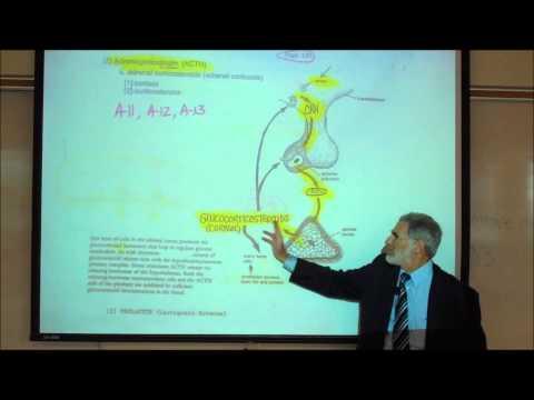 ADRENOCORTICOTROPIN (ACTH) & THE REGULATION OF CORTISOL by Professor Fink