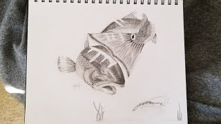 How To Draw Redfish Speed Drawing