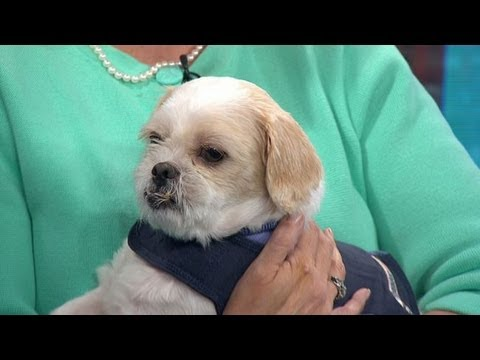 Keep Your Pet Calm During Thunderstorms