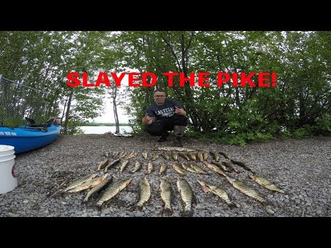 Fishing Alaska Episode 5 --- SLAYING THE PIKE!!!