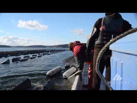 On a boat with oyster farmers