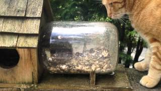 """My Cat Fritter Trying To Get A Squirrel In Our """"squirrel Under Glass"""" Feeder."""